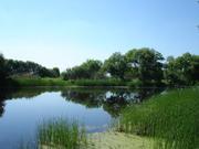 Земельный участок 5, 5 Га с озером (в 3-х км. от центра Новой Усмани)