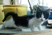 Котята-девочки срочно ищут дом