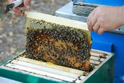 Ульи для пчел,  пасеки,  пчелоинвентарь,  вощина из Мурома