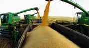 Сельхозпродукция УРОЖАЯ 2013 года