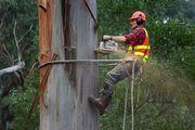 Спиливание аварийных деревьев. Удаление веток