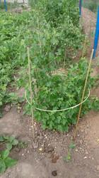 Колышки для помидор,  опоры для растений