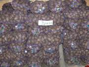 Продажа картофеля от производителя