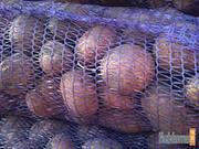 Продаем семенной картофель оптом