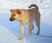 Собаки в дар для охраны и дружбы