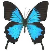 Живые тропические бабочки Бабочки Воронеж!